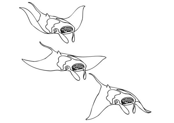Manta Ray, : School of Manta Ray Coloring Pages