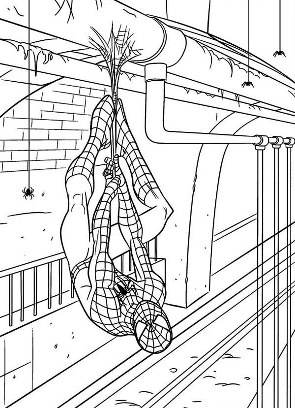 Spiderman, : Spiderman Hanging on Gas Pipe Coloring Page