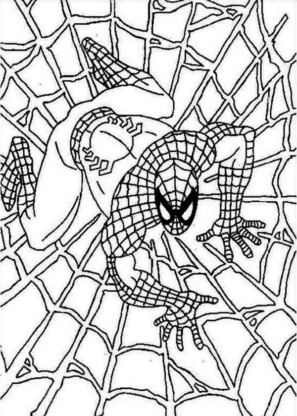 Spiderman, : Spiderman on Spider Webs Coloring Page